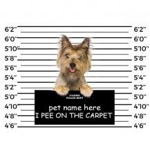 Yorkshire Terrier-ARREST PHOTO